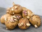 Filizlenen Patates Öldürebilir!