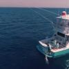 İzmir'de 190 Kiloluk Dev Balık, En Büyük Balık Kategorisinde Birincilik Getirdi