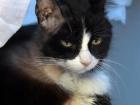 'Panda' adlı kedi böbrek naklinden kök hücreyle kurtuldu