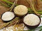 Pirinç Beyin Kanamasını Önlüyor