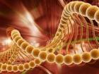 Vücudun Bağışıklık Sistemi Kansere Kalkan Oluyor